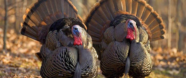 2015 Thanksgiving Turkey Shoot